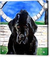 Newfoundland Acrylic Print by Jon Baldwin  Art