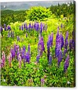 Newfoundland Meadow Acrylic Print by Elena Elisseeva