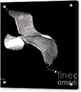 Night Flight Acrylic Print by Dale   Ford