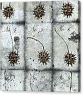 Nine Seed Pods Acrylic Print by Carol Leigh