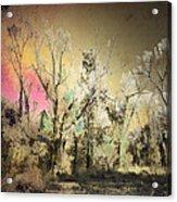 No. 10 Peyote Place Acrylic Print by Arne Hansen