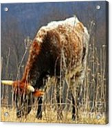 No Bull Acrylic Print by Joyce Kimble Smith