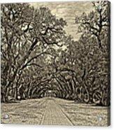 Oak Alley 3 Antique Sepia Acrylic Print by Steve Harrington