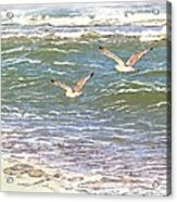 Ocean Seagulls Acrylic Print by Cindy Wright