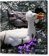Oh Happy Day Acrylic Print by Karen Wiles