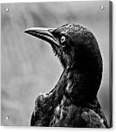 On Alert - Bw Acrylic Print by Christopher Holmes