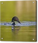 On Glassy Waters Acrylic Print by Tim Grams