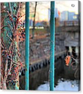 On The Fence Acrylic Print by JC Findley