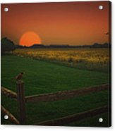 On The Fence Acrylic Print by Tom York Images