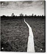 On The Swamp Acrylic Print by Konstantin Dikovsky