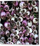 Onion Power Acrylic Print by Susan Herber