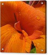 Orange Canna Acrylic Print by Peg Toliver