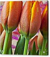 Orange Yellow Tulips Acrylic Print by Garry Gay