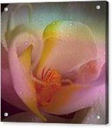 Orchid Splendor Acrylic Print by Shirley Sirois