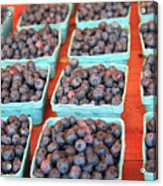 Organic Blackberries Acrylic Print by Wendy Connett