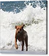 Out Of The Waves Acrylic Print by Renae Laughner