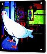 Owl Pigeon Acrylic Print by YoMamaBird Rhonda
