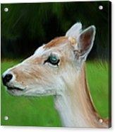 Painted Deer Acrylic Print by Mariola Bitner