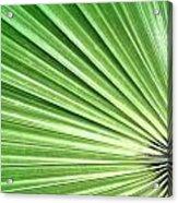 Palm Leaf Acrylic Print by Rudy Umans