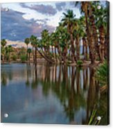 Palms Trees Over Papago Lake Acrylic Print by Dave Dilli