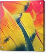 Parrot Feathers Acrylic Print by Flash Parker