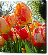 Parrot Tulips In Philadelphia Acrylic Print by Mother Nature