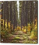 Path Into The Forest In Autumn Sault Acrylic Print by Susan Dykstra
