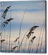 Pensacola Beach Sea Oats Acrylic Print by Steven Gray
