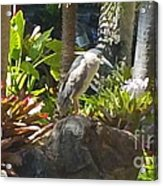 Perched Bird Acrylic Print by Silvie Kendall