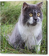 Persian Cat Sit In Green Yard Acrylic Print by Nawarat Namphon