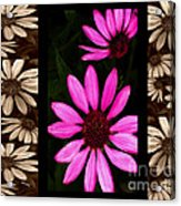 Petal Collage Acrylic Print by Cheryl Young