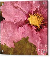 Petaline - Ar01bt04c2 Acrylic Print by Variance Collections