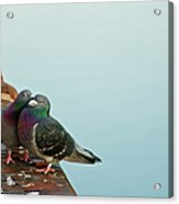 Pigeons In Love Acrylic Print by Image by J. Parsons