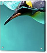 Pinguin Acrylic Print by Www.photo-chick.com