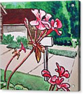 Pink Geranium Sketchbook Project Down My Street Acrylic Print by Irina Sztukowski