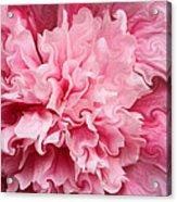 Pink Acrylic Print by Kristin Elmquist