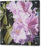 Pink Rhododendron Acrylic Print by Sharon Freeman