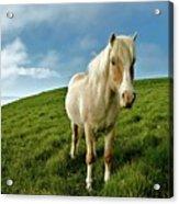 Pony On Mykines Acrylic Print by © Rune S. Johnsson