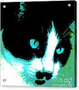 Poster Kitty Acrylic Print by Elinor Mavor
