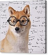 Professor Dog Acrylic Print by Eric Jung
