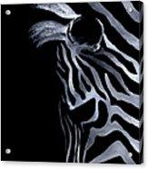 Profile Of Zebra Acrylic Print by Natasha Denger