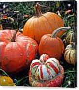 Pumpkin Patch Acrylic Print by Kathy Yates