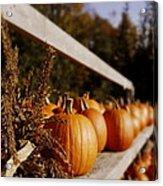 Pumpkins Aglow Acrylic Print by Christine Tuck