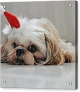 Puppy Wearing Santa Hat Acrylic Print by Sonicloh