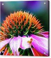 Purple Coneflower Delight Acrylic Print by Bill Tiepelman