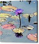 Purple Mirror Acrylic Print by