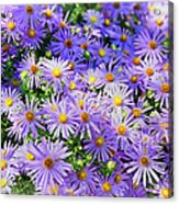 Purple Reigns Acrylic Print by Joan Carroll