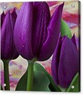 Purple Tulips Acrylic Print by Garry Gay