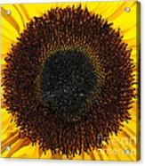 Radiance Acrylic Print by Luke Moore
