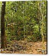 Rain Forest Acrylic Print by John Buxton